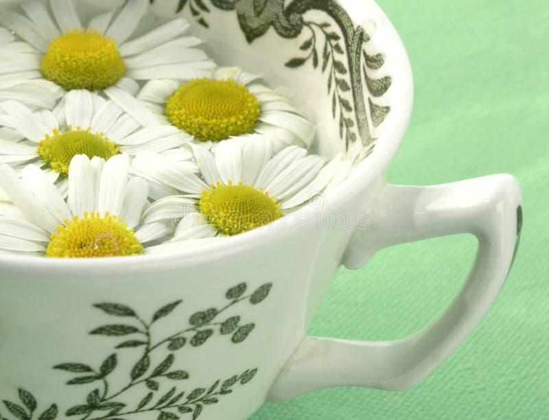 herbata ziołowa rumianek zdjęcia stock