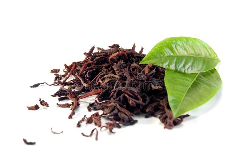 herbaty. zdjęcia stock