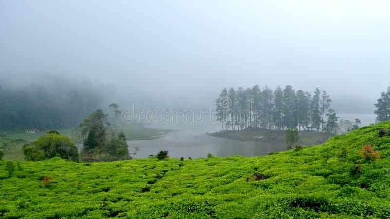 Herbaty pole jeziorem zdjęcie royalty free