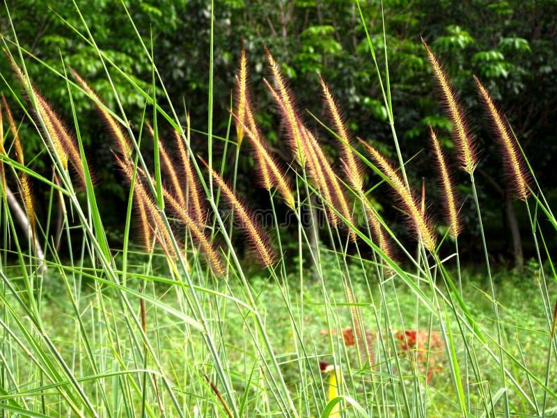 Herbe à la forêt et à l'arrière-plan de beauté photos libres de droits