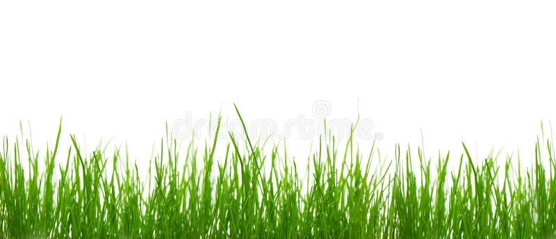 Download Herbe image stock. Image du nature, pré, ambiant, jardin - 4350555