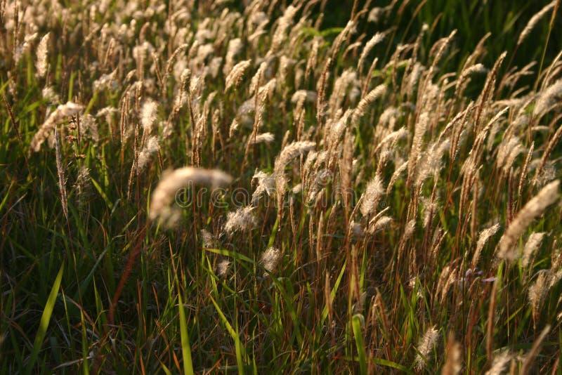 Download Herbe photo stock. Image du fond, herbe, végétation, chat - 726246