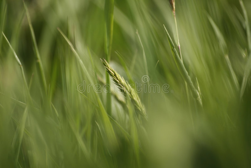 Herbe abstraite photo libre de droits