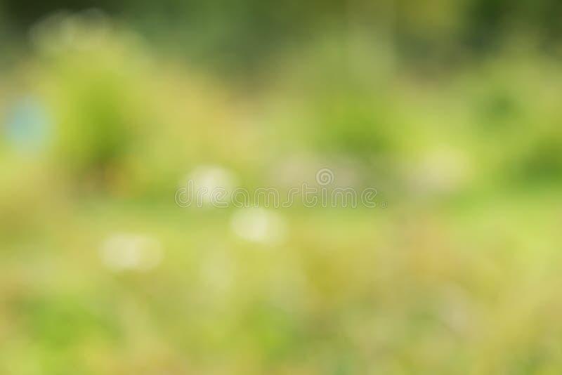 Herbe abstraite de fonds naturels photo stock