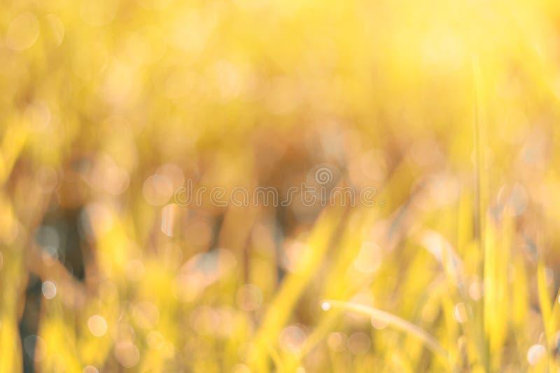 Herbe abstraite de fonds naturels avec le bokeh closeup photo libre de droits