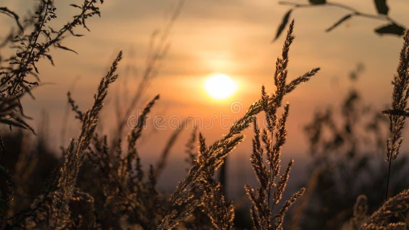 Herbe avec le fond de coucher du soleil photographie stock