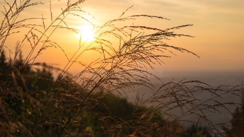 Herbe avec le fond de coucher du soleil image stock