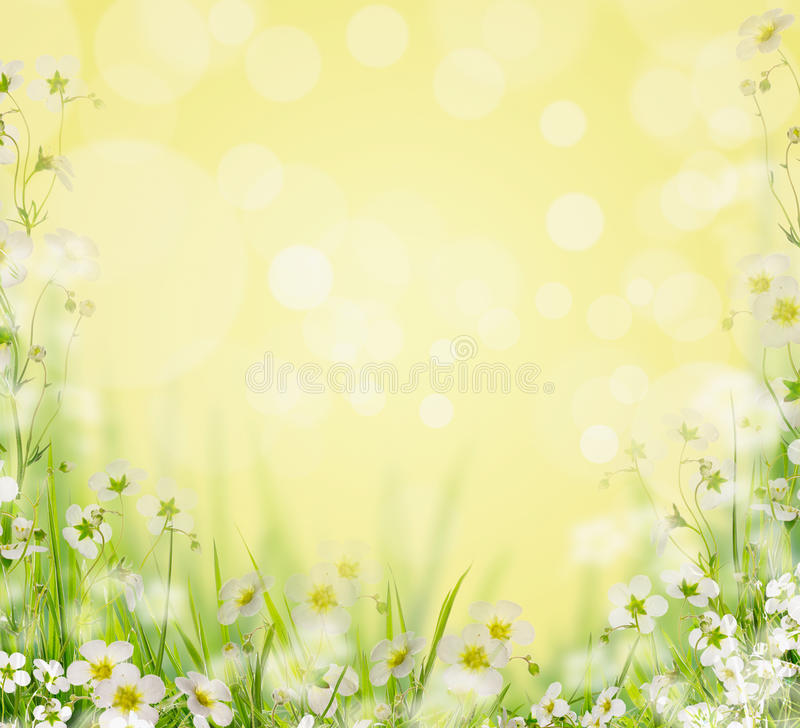 Herbe avec les fleurs blanches, fond brouillé de nature, photographie stock