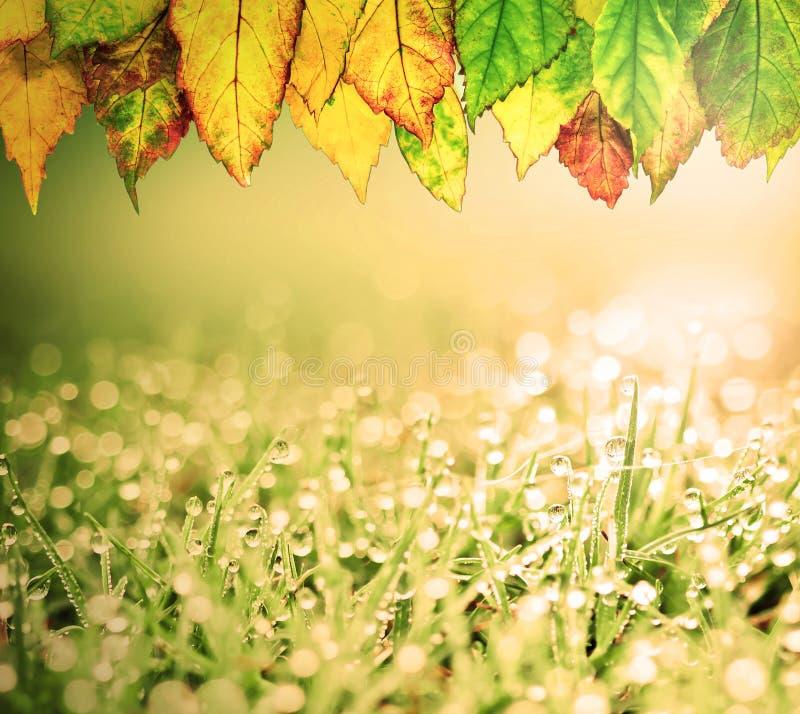Herbe avec les gouttelettes de feuilles d'automne et d'eau de pluie et le boke de beauté image stock