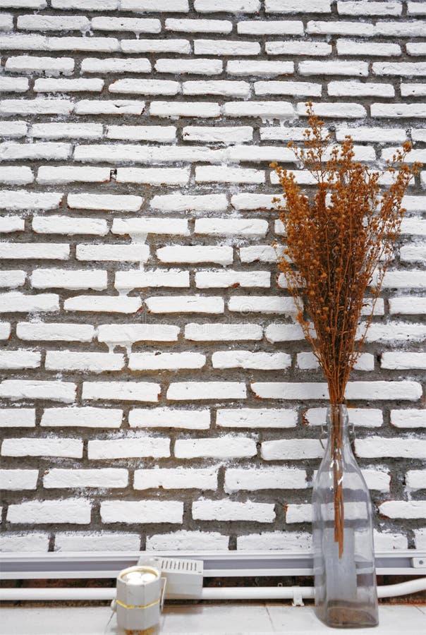 Herbe brune sèche dans la bouteille en verre claire sur le fond blanc de mur de briques photo libre de droits