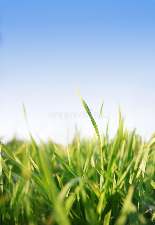Herbe, ciel bleu photographie stock