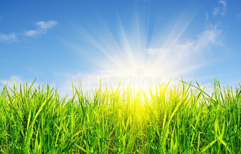 Herbe, ciel et soleil photos libres de droits