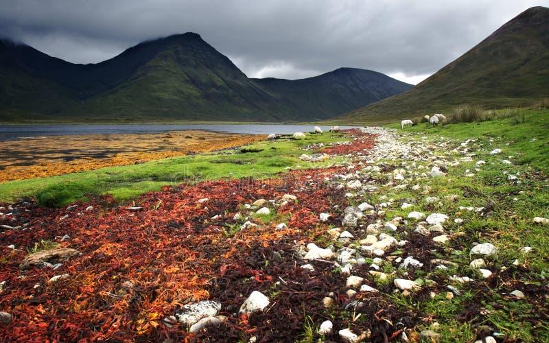 Herbe colorée de mer au lac photos stock