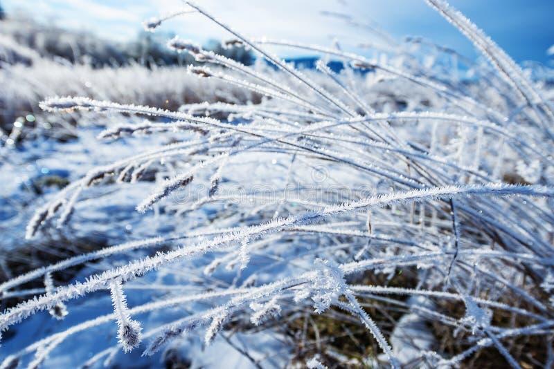 Herbe congelée images stock