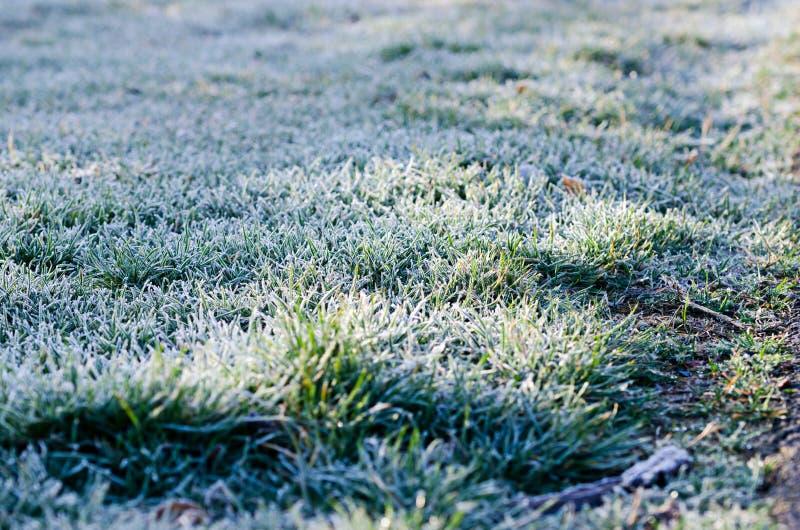 Herbe congelée image libre de droits