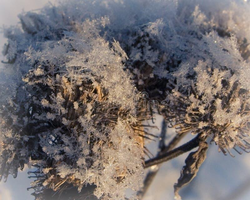 Herbe congelée un jour givré en hiver photos stock