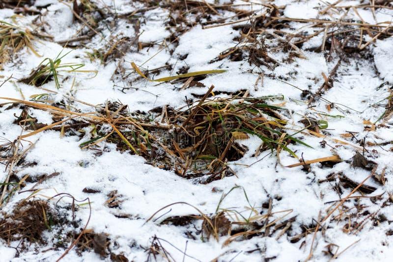 Herbe couverte de neige image libre de droits