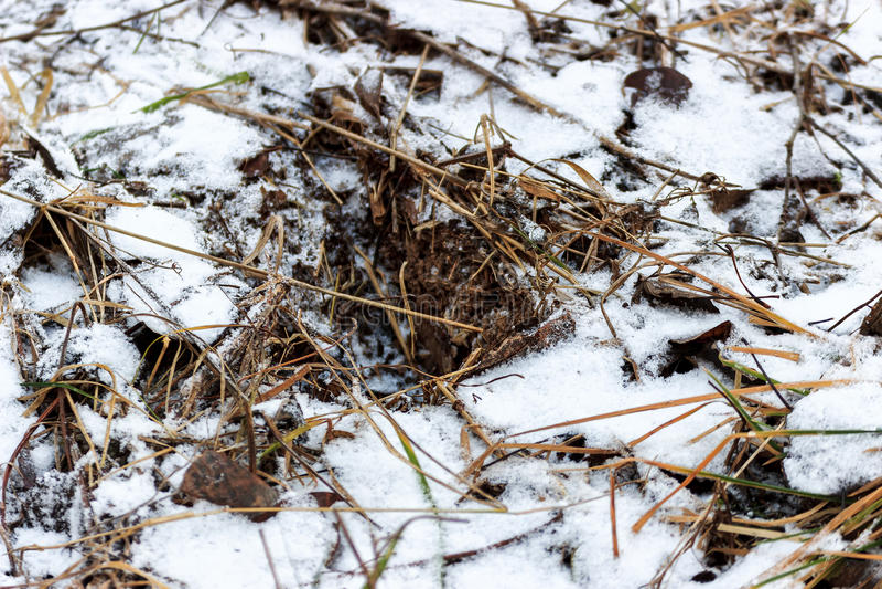 Herbe couverte de neige images stock