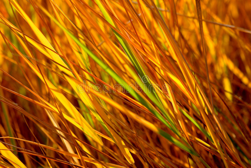 Herbe d'automne images stock