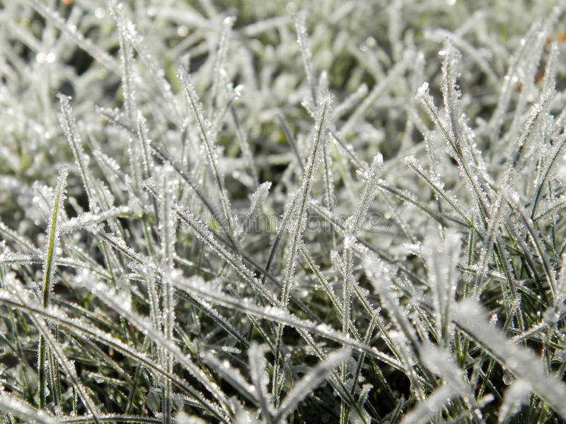 Herbe d'hiver photographie stock