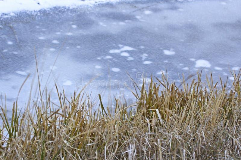 Herbe d'hiver de Brown sur la berge congelée images stock