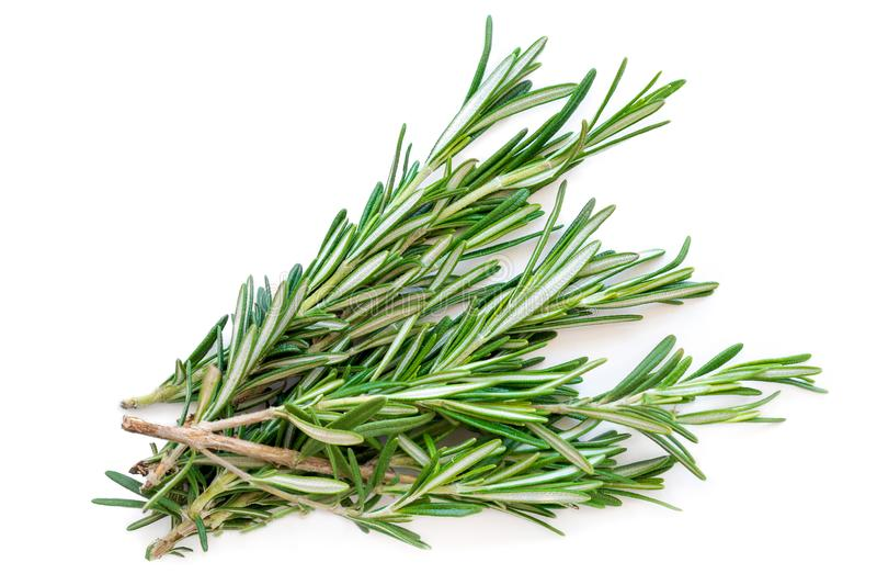 Herbe d'isolement de romarin Groupe vert frais de romarin d'isolement sur a images stock