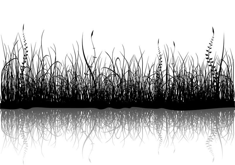 Herbe - d'isolement sur le blanc illustration stock