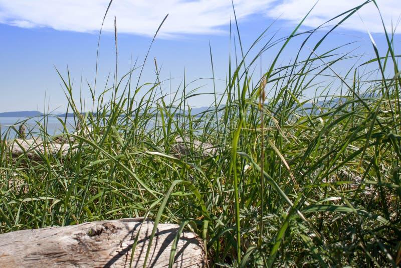 Herbe d'océan sur le rivage photographie stock libre de droits