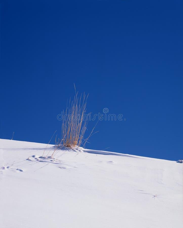 Herbe dans la neige photos libres de droits