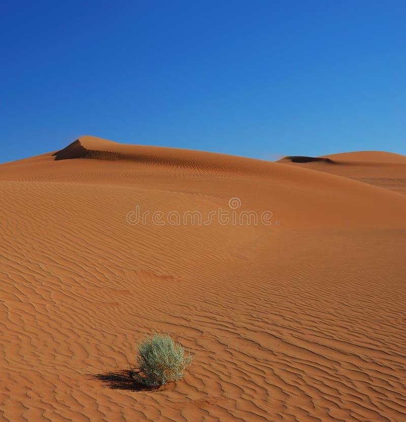 Herbe Dans Les Dunes Photos libres de droits