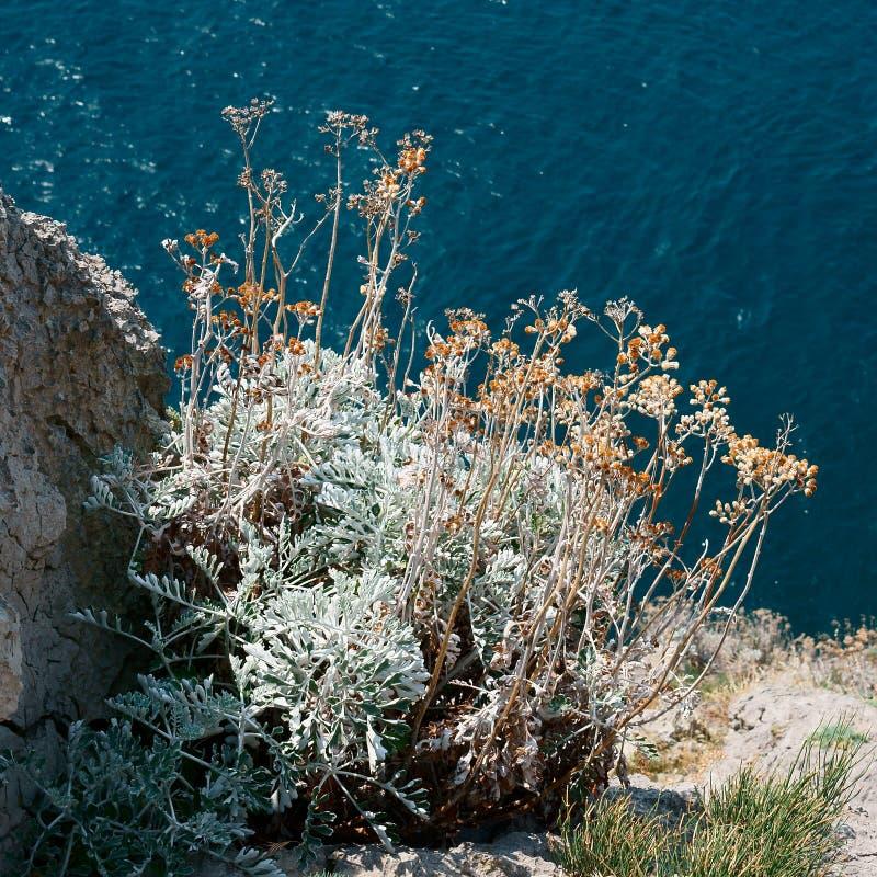 Herbe de Bush sur la pente des roches photo libre de droits