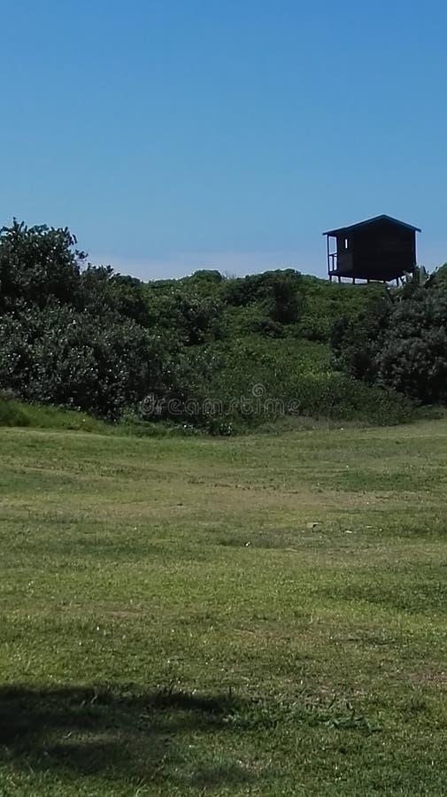 Herbe de cabane dans un arbre de ciel bleu photos stock