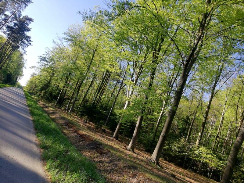 Herbe de ciel bleu d'arbres forestiers photographie stock libre de droits
