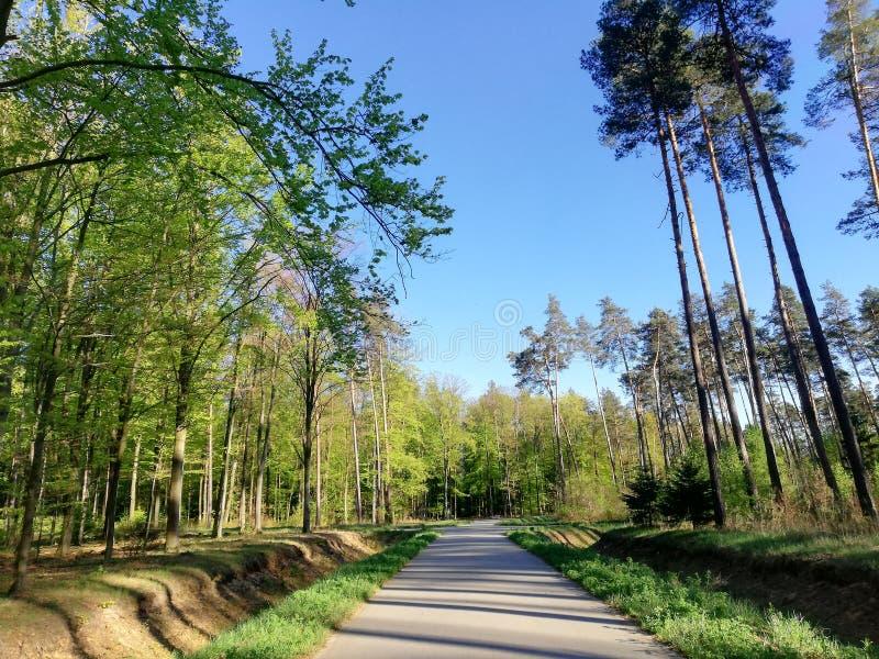 Herbe de ciel bleu d'arbres forestiers image stock