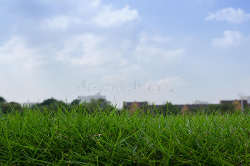 Herbe de cour verte image stock