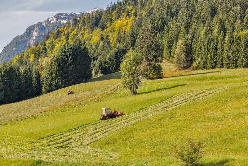 Herbe de fauchage de tracteur sur une pelouse alpine photo libre de droits