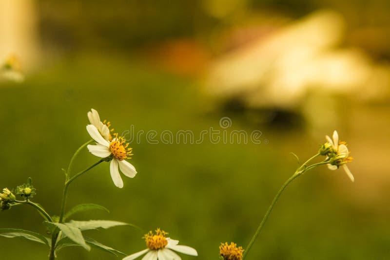 Herbe de fleur à l'arrière-plan mol de couleur photos stock