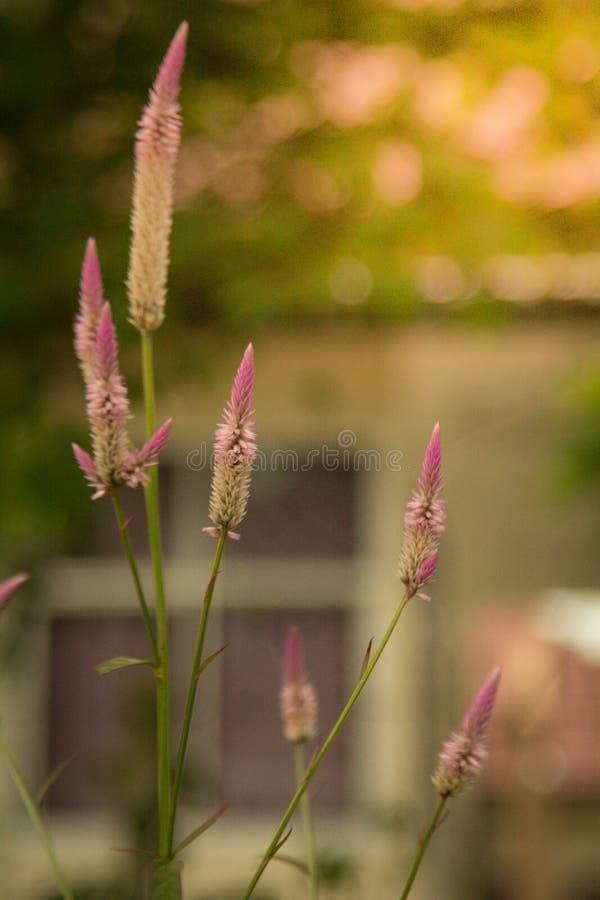 Herbe de fleur à l'arrière-plan mol de couleur image stock