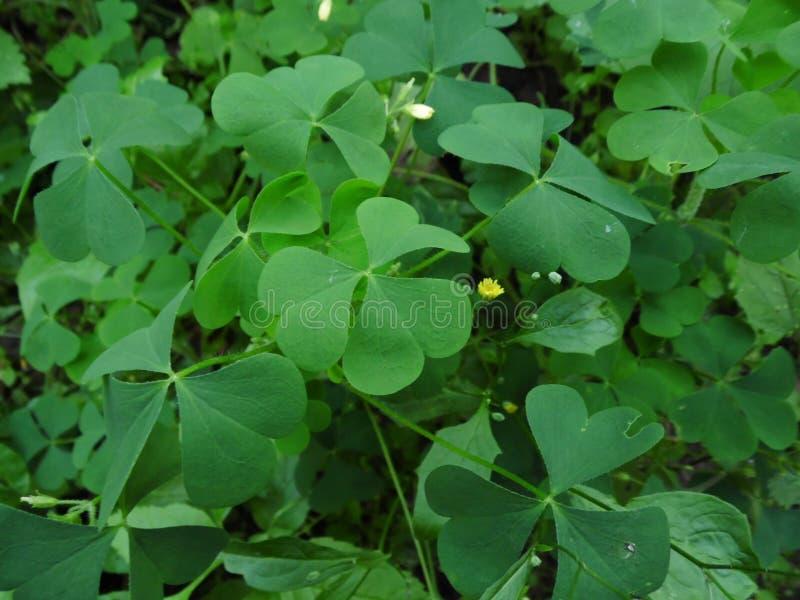 Herbe de forêt photo stock