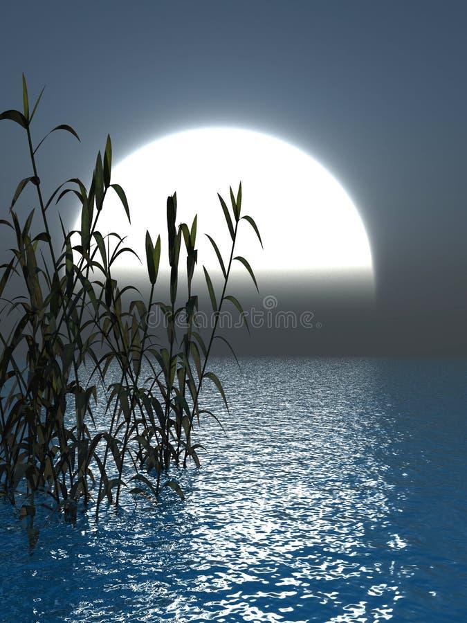 Herbe de l'eau illustration libre de droits
