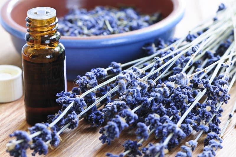 Herbe de lavande et huile essentielle images libres de droits