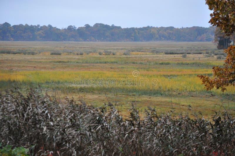 Herbe de marais en automne image stock