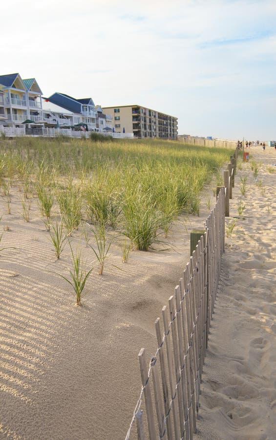Herbe de mer sur les dunes et une barrière en bois image libre de droits