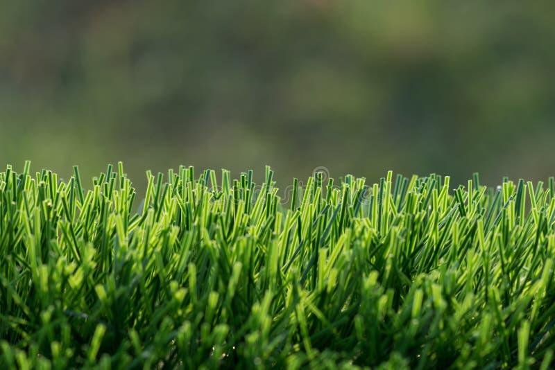 Herbe de pelouse avec la lumière du soleil photos libres de droits