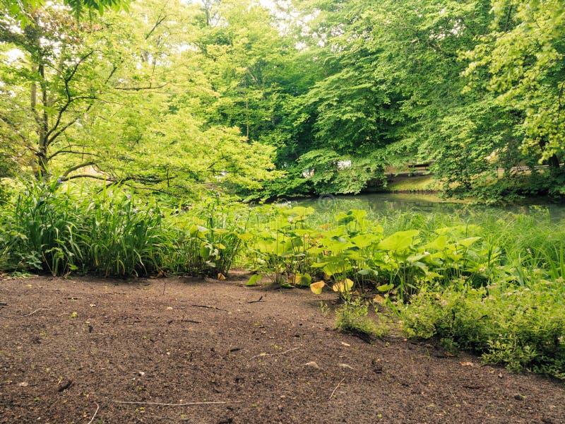 Plante verte exterieur jardin gallery of plante jardin for Plante verte exterieur sans entretien
