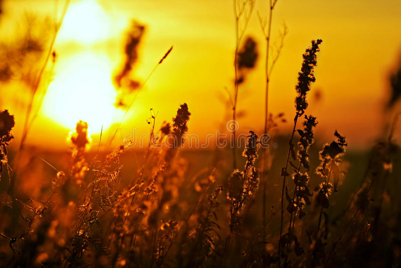 Download Herbe De Pré Au Coucher Du Soleil Image stock - Image du vibrant, chaud: 56488899