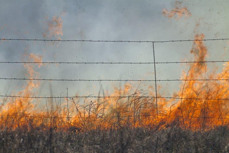 Herbe de prairie brûlante avec la barrière photographie stock
