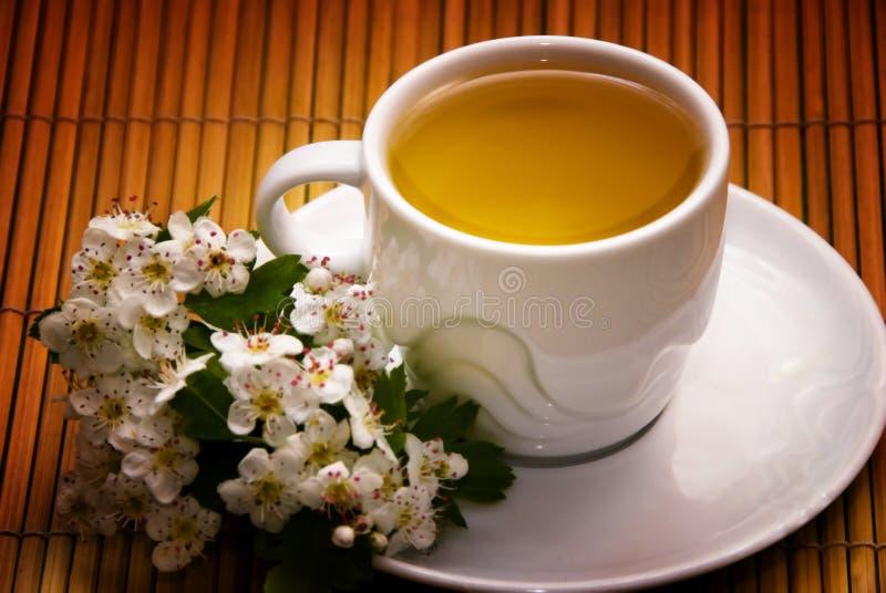 Herbe de thé image stock