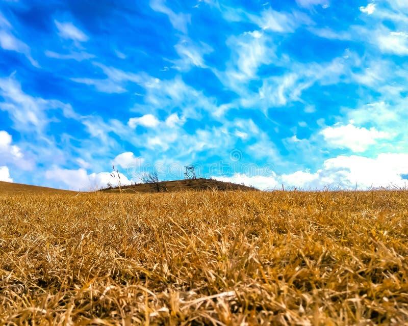 Herbe de Wither dans la montagne photos stock