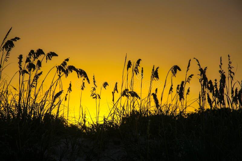 Herbe des dunes de sable, coucher du soleil jaune, Key Biscayne la Floride, Etats-Unis image stock